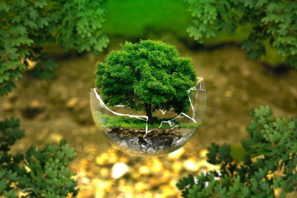 #70 Papprets miljöförtjänster syns med en bredare analys